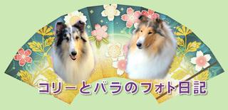 blog_se002.jpg